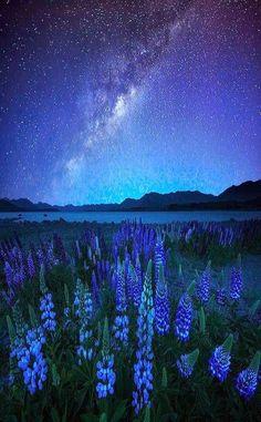 Midnight Blue - Lupines and Star, Lake Tekapo, New Zealand
