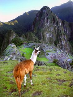 Machu Picchu - Bill Holsten Photography