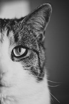 Cat Eye by Jo Bekah Photography & Design
