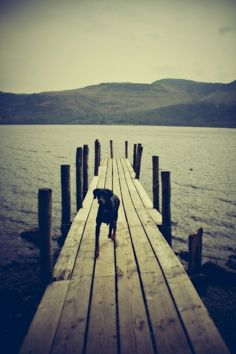 #lake loveable-mutts