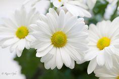 Flowers.... by Rajeev Ojha - Photo 124255599 - 500px