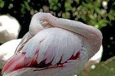 Flamingo's rest