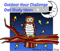 Outdoor Hour Challenge Owl Study @handbookofnaturestudy Nature Study, Homeschooling, Owl, Challenges, Comic Books, Birds, Weather, Outdoor, Outdoors