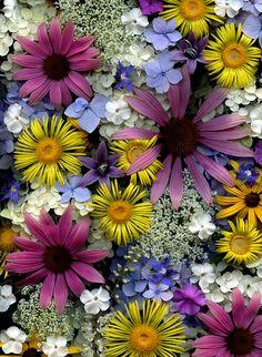 55485.01 flowers | Flickr: Intercambio de fotos