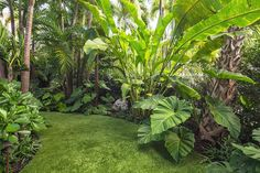 Get advice for enjoying a good looking Florida Gardening, field, or front yard. Our experts inform you all the essentials to effectively South Florida Gardening Tropical Backyard Landscaping, Tropical Garden Design, Florida Landscaping, Florida Gardening, Landscaping Ideas, Tropical Gardens, Landscaping Software, Backyard Plants, Luxury Landscaping