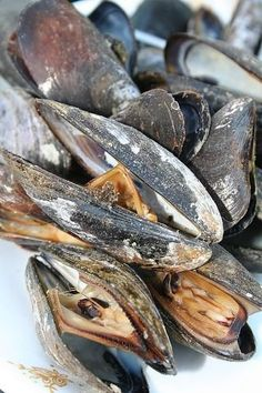 Easy Appetizer: Clams and Mussels on the Grill