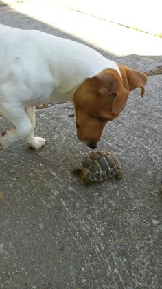 Merlin with turtle Hope ❤