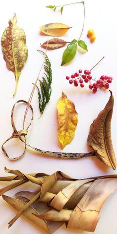New Leaf Portraits | The JungalowThe Jungalow
