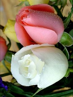 White and Pink ❤ - Sophie Dahl - Google+