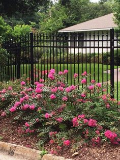 Spring flowers, move over. Theseastounding shrubs can get any gardener through the summer doldrums. Flowering Shrubs For Shade, Shade Loving Shrubs, Shade Shrubs, Shade Plants, Fast Growing Trees, Growing Flowers, Growing Plants, Evergreen Shrubs, Deciduous Trees