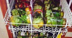 Ein genialer Tipp:Gewürzgurken im Geschirrspüler einkochen