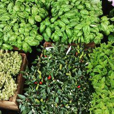 Aromas of fresh herbs in spring!