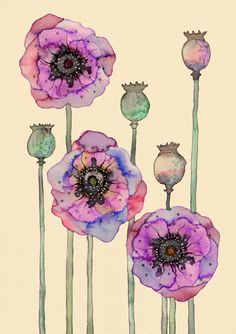 Poppies, watercolor, artist unknown