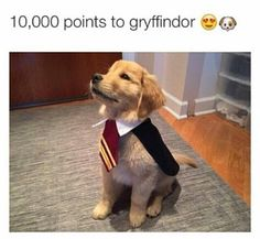 And the best part is.... I'm in Gryffindor!! But seriously I love this dog!