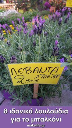 8 ιδανικά λουλούδια για το μπαλκόνι μου μόνο με 16 ευρώ. Όταν λέω ιδανικά λουλούδια δεν εννοώ ιδανικά μόνο για την ομορφιά τους. Ιδανικά για μένα είναι τα πιο ανθεκτικά, που δεν θέλουν ιδιαίτερη περιποίηση και που κοστίζουν λιγότερο. Vegetable Garden Design, Small Garden Design, Free To Use Images, Holiday Parties, Garden Plants, Home And Garden, Backyard, Patio, Herbs