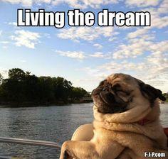 Funny Pug Dog Living Dream