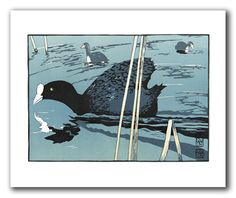 'Coots' by Ian Phillips (T013)