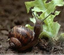 Hoselink Blog Gardening