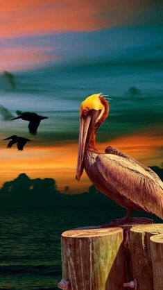 Pelican.  For similar pins please follow me at - https://www.pinterest.com/annelouise1959/mother-nature-travel-and-discover-her-beauty/