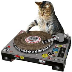 Because every cat has a playlist to share.