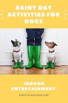 On rainy days, we need some fun, indoor activities to keep our dogs happy. Dog games reduce boredom and keep your dog his mind active. It's also an excellent way to bond with your pooch. Click to read about these awesome boredom busters, or repin for later!