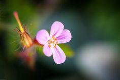 Vanoise National Park - France 2012 | Flickr : partage de photos !