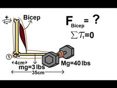 Physics - Mechanics: Torque (5 of 7) The Bicep - YouTube