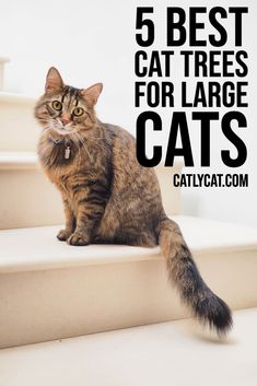 Top 5 Best Cat Trees for Large Cats in 2020 - CatlyCat Small Cat Tree, Diy Cat Tree, Cool Cat Trees, Cool Cats, Cat Gym, Animal Gato, Cat Towers, Cat Playground, Cat Enclosure