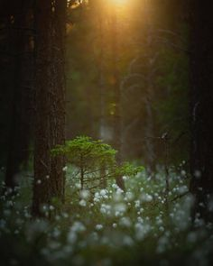 forest view Forest viewYou can find Magical forest and more on our website Fairy Tale Forest, Mystical Forest, Magic Forest, Landscape Photography Tips, Forest Photography, Forest View, Outdoor Landscaping, Scenery, Fantasy