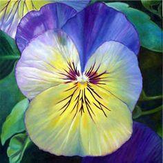 viola tricolor | Sonia Corner