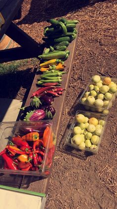 A massive harvest I did for an event a couple of months ago! Recognize anything? https://i.redd.it/i98b4fkj87201.jpg
