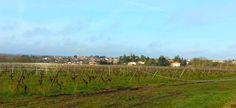 Le vignoble vers Vallet (44)