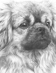 OPEN EDITION PRINTS from Original Graphite Pencil Drawings by Mike Sibley Fine Art