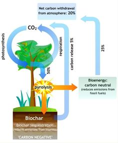 Biochar and carbon-negative bioenergy: boosts crop yields, fights climate change and reduces deforestation