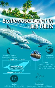 Bottlenose dolphin facts - dolphins-world.com