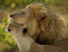 Majestic couple #relationshipgoals lol!