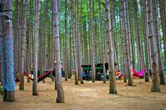 Hammocks are life   Photo credit: Candy Carter