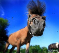 Horses are my love… (horse,funny,animals,photography,beautiful,nature)