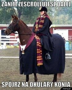 23 Pictures That Prove Horses Are More Relatable Than Humans Harry Potter Love, Harry Potter Fandom, Harry Potter Memes, Reaction Pictures, Funny Pictures, Horse Meme, Very Funny Memes, Cute Animal Memes, Bonnie Wright