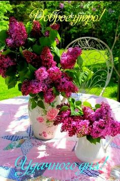 Good Night Greetings, Beautiful Roses, Animals Beautiful, Pictures, Gardens, Health Foods, Food, Crafting, Cutest Animals