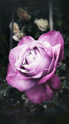 Flor morada...