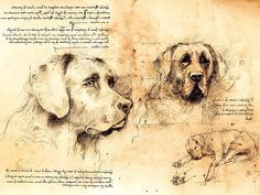 Leonardo's Dogs