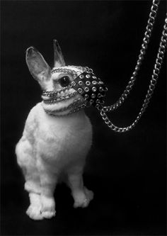 BDSM The Bunny.