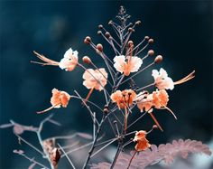 Tips for Better Flower Photography - Learn how to improve your flower photos