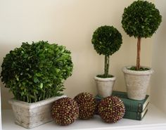 These preserved boxwood topiary are a versatile addition to any space with their natural evergreen beauty. #preservedboxwood #boxwoodtopiary #homedecor