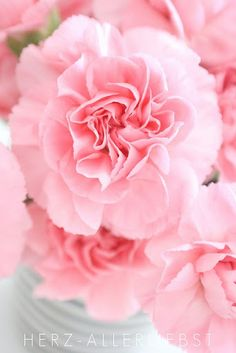 LOVE the smell of carnations. They remind me of my Dad who taught me everything about flowers...he loved the smell. I still stop and smell them, and roses, and stocks, plumeria......:)