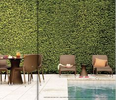 dense, green, tall privacy fence around pool verde externa artificial Ficus Pumila, Outdoor Rooms, Outdoor Gardens, Outdoor Living, Outdoor Decor, Garden Furniture, Outdoor Furniture Sets, Metal Furniture, Furniture Ads