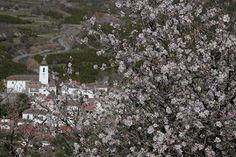 blossom in #lecrin #valley