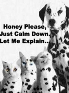 dalmation cat                             Incoming search terms:funny cat captionscute cat pictures with captionsfunny cats with captionsfunny cat and dog picturesLovable couple