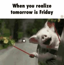 """55 """"Almost Friday"""" Memes - """"When you realize tomorrow is Friday."""" This Little Piggy, Little Pigs, Funny Videos, Gif Silvester, Photo Humour, Gif Humour, Funny Animals, Cute Animals, Gato Gif"""